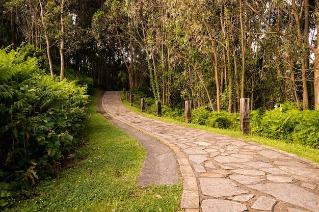 Strada tortuosa di pietra attraverso la foresta verde soleggiata illuminata da raggi di sole.