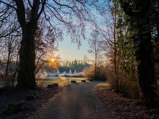 Strada vuota nel mezzo di una foresta