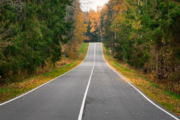 Strada vuota nella foresta di autunno