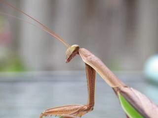Straniero come insetto