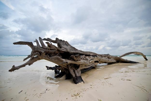 Strappo sulla riva dell'oceano