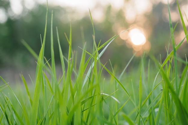 Stretta di erba verde