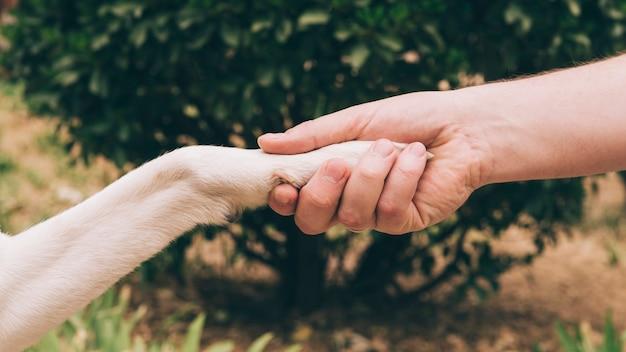 Stretta di mano di cane e uomo