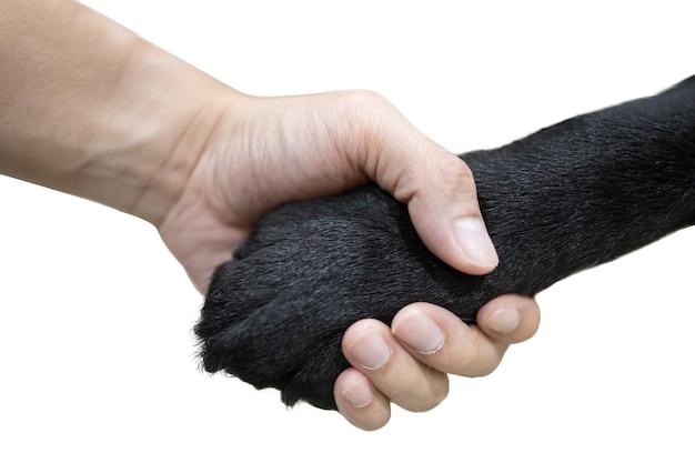 Stretta di mano isolata fra una mano dell'uomo con la mano del cane nero