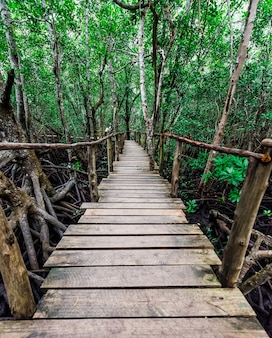 Stretto ponte di legno