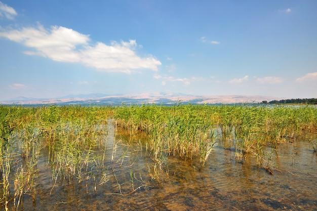 Striscia costiera del lago kinneret con cespugli luglio