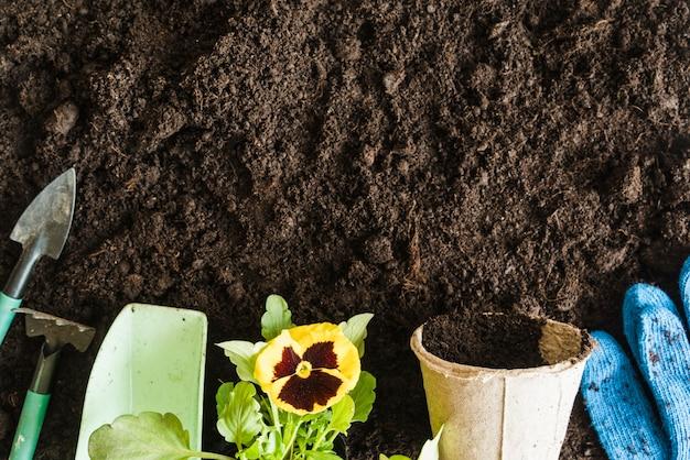 Strumenti da giardinaggio; misurino; pianta del fiore viola; pentola di torba e guanti da giardinaggio blu sullo sfondo del terreno