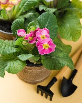 Strumenti dell'angolo alto accanto al vaso di fiore di fioritura