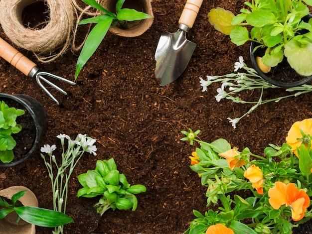 Strumenti e piante da giardinaggio vista dall'alto