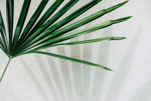 Struttura astratta del fondo delle foglie di palma delle ombre su un muro di cemento