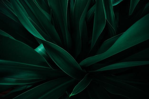 Struttura astratta della foglia verde