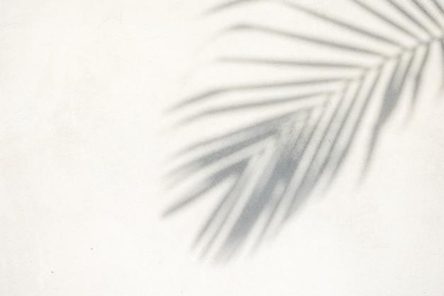 Struttura astratta della priorità bassa delle foglie di palma delle ombre su un muro di cemento