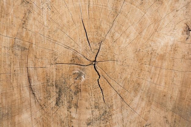 Struttura del ceppo di albero con crepe