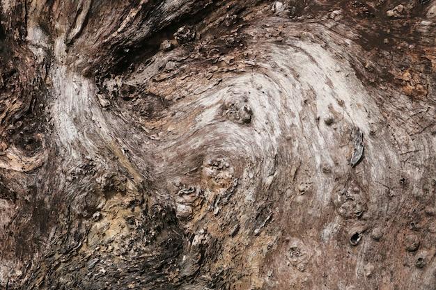 Struttura del ceppo di albero