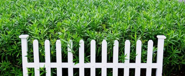 Struttura del fondo delle foglie verdi, sfondo naturale