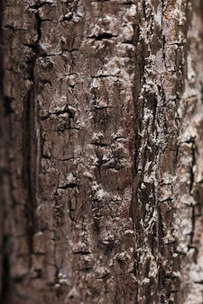 Struttura del legno alto vicino