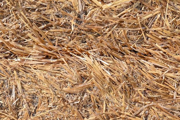 Struttura del primo piano del fieno dell'erba secca