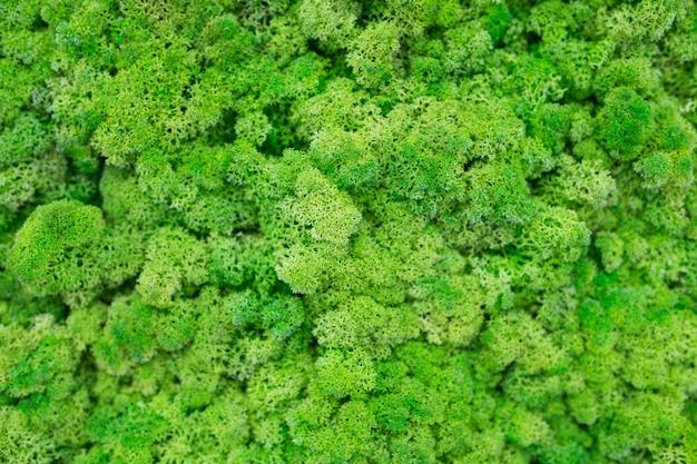 Struttura del primo piano verde del muschio ecologico.