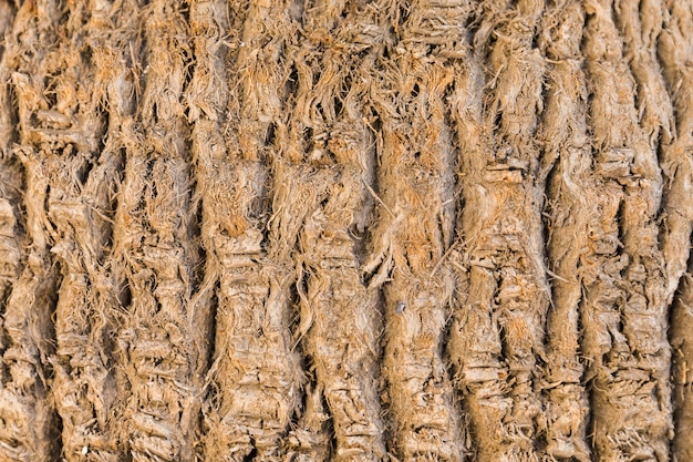 Struttura del tronco di legno nella fine in su