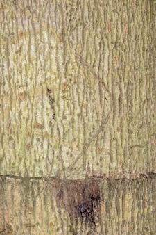 Struttura della corteccia di albero per fondo