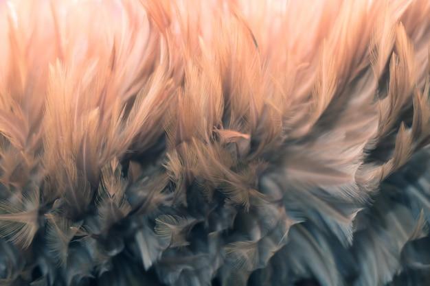 Struttura della piuma dei polli dell'uccello della sfuocatura per fondo, fantasia, colore astratto e morbido di progettazione di arte.