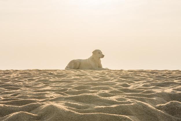 Struttura della sabbia della spiaggia su fondo bianco