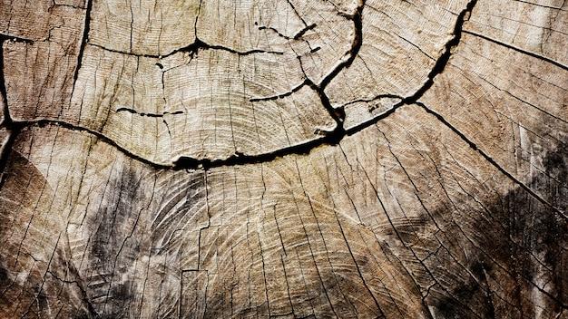 Struttura di legno al ceppo