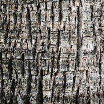 Struttura di legno del primo piano di un albero