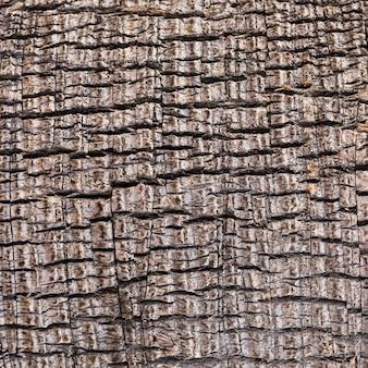 Struttura di legno del primo piano estremo