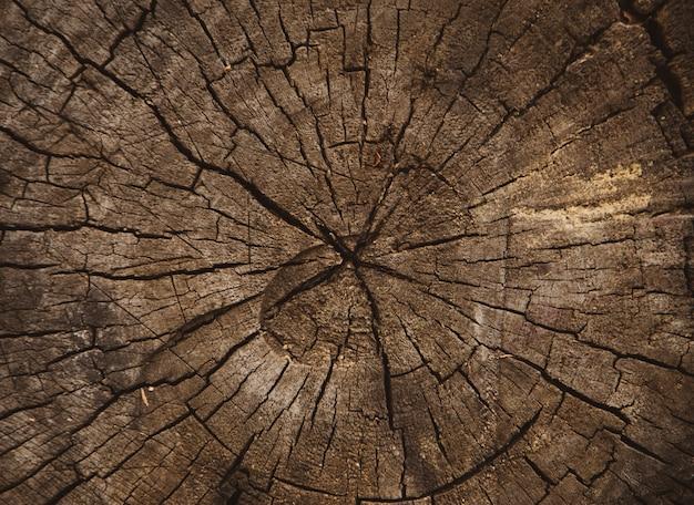 Struttura di legno del tronco di albero tagliato, anelli di albero, struttura del fondo del primo piano