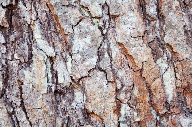 Struttura di legno - particolare del tronco di un albero