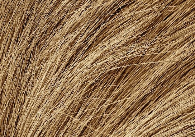 Struttura di lerciume dell'erba asciutta