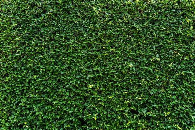 Struttura e fondo della parete dell'erba