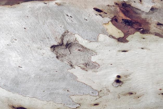 Struttura in legno del vecchio albero