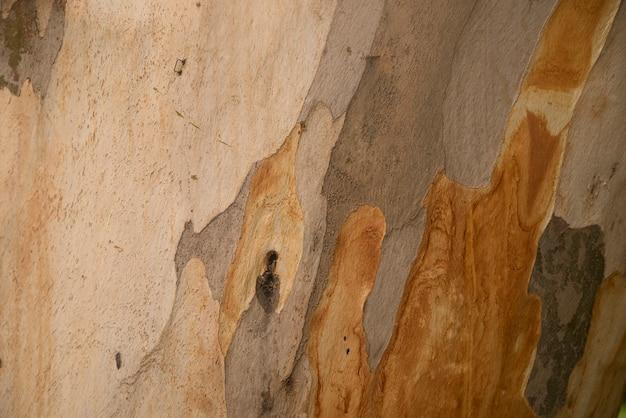 Struttura in legno. platan tree