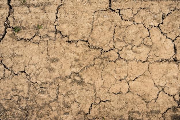 Struttura incrinata del suolo asciutto del suolo