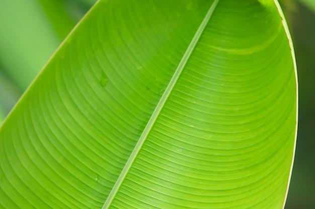 Struttura luminosa della foglia verde con gocce d'acqua