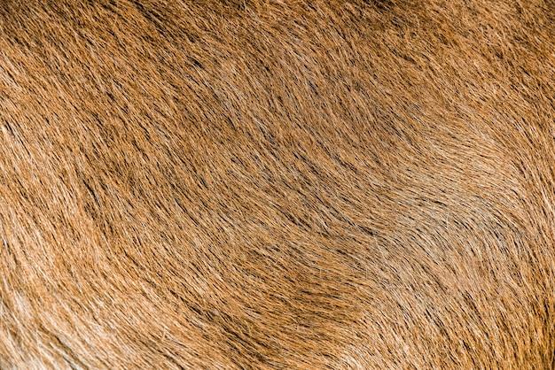 Struttura naturale della pelle dello sfondo della pelliccia di capra marrone.