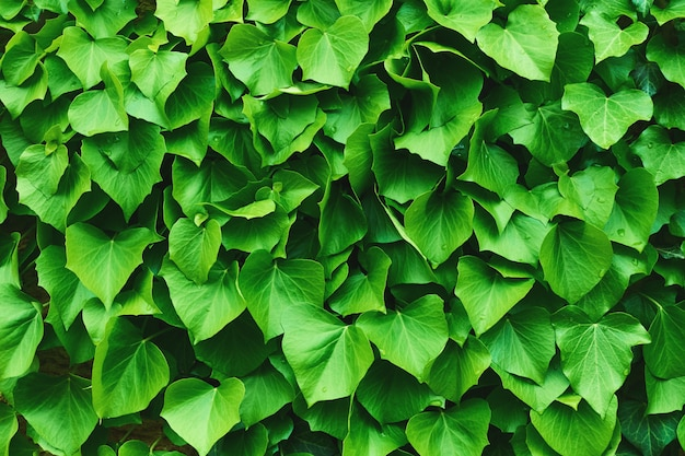 Struttura organica tropicale delle foglie verdi