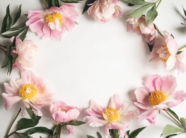 Struttura rosa della peonia isolata su fondo bianco e spazio aperto per testo. sfondo di botanica. vista dall'alto