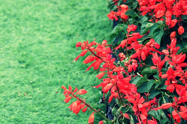 Struttura rossa del fondo del fiore, sfondo naturale