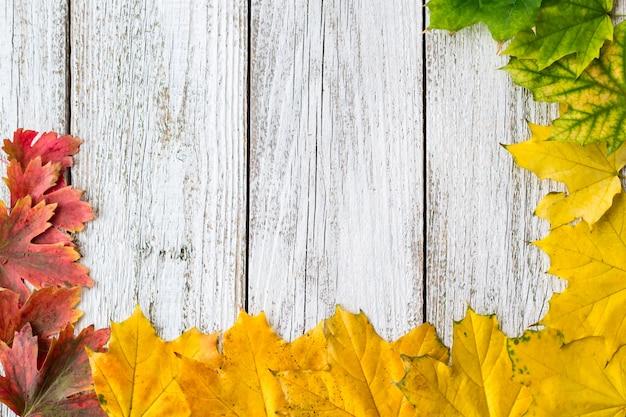 Struttura stagionale delle foglie di acero autunnali con colore di pendenza su fondo di legno bianco