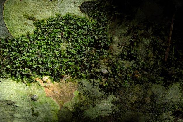 Struttura verde del muschio in natura