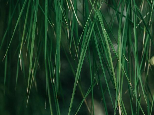 Struttura verde foglia / priorità bassa di struttura del foglio