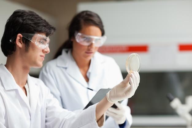Studenti di scienze che esaminano la capsula di petri in un laboratorio