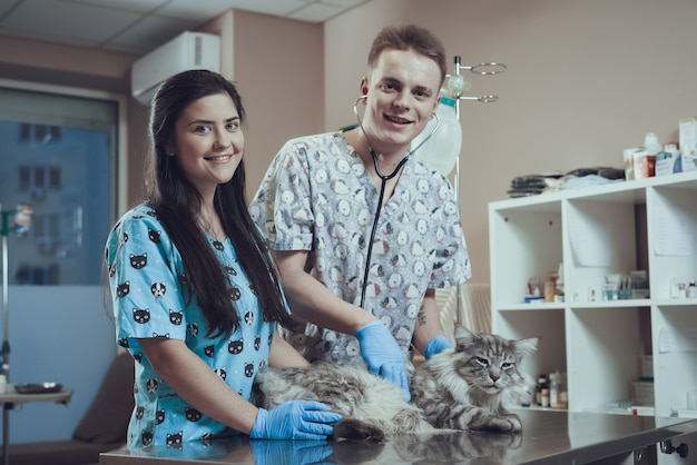 Studenti veterinari felici che esaminano gatto peloso in clinica