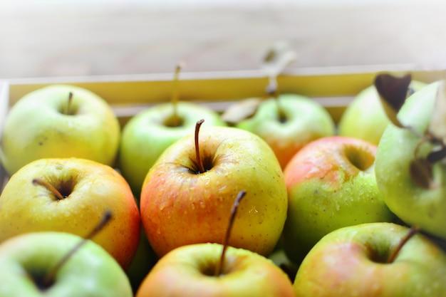 Succose mele mature. le mele rosso-verdi sono ordinatamente impilate in fila. frutta in una scatola di legno. peasgood's nonsuch apple