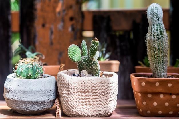 Succulente e cactus