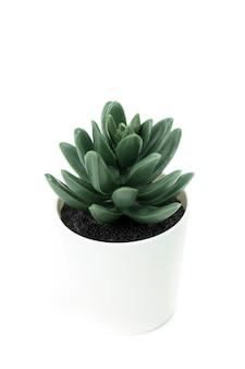 Succulente in vaso bianco isolato sul muro bianco, cosmetici di aloe