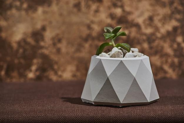 Succulente in vaso concreto su marrone